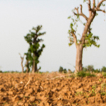 Sahel-Photo-by-Thinkstock-150x150